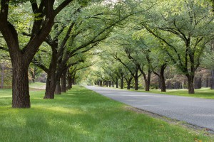 43154379 - beautiful tree lined avenue, canberra, capital city of australia