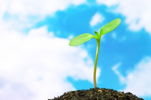 14958255 - sunflower sprout on blue sky background  horizontal