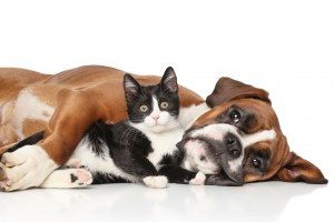 35764134 - close-up cat and dog together lying on the floor