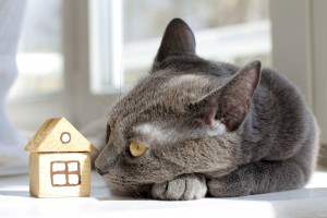 54757531 - cat resting comfortably at home with a toy house